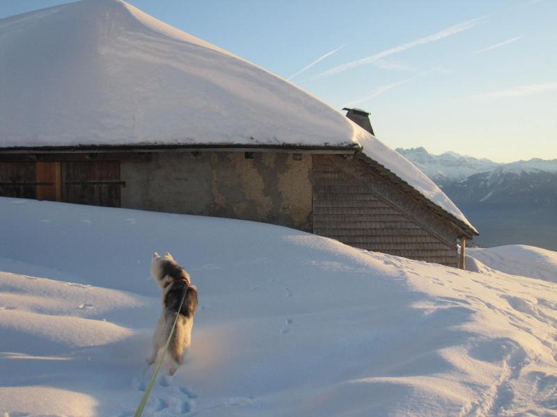 Saskia dans la neige en décembre 2011 819