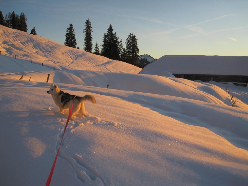 Saskia dans la neige en décembre 2011 - Page 2 820