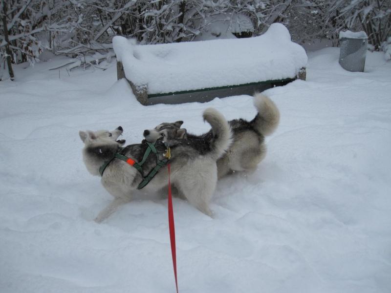Nouvelles courses de Saskia dans la neige 836