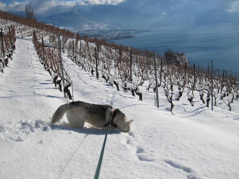 Nouvelles courses de Saskia dans la neige 838