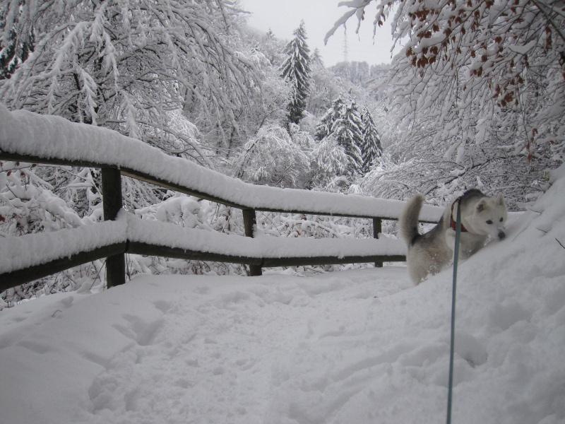 Saskia dans la neige en décembre 2011 916