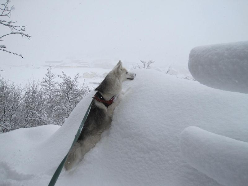 Saskia dans la neige en décembre 2011 917
