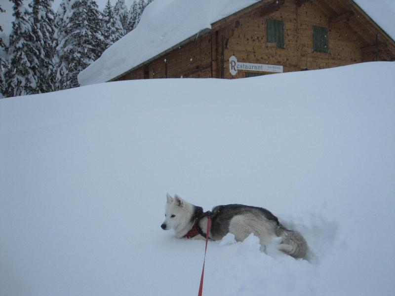 Saskia dans la neige en décembre 2011 918