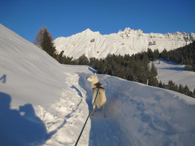 Saskia dans la neige en décembre 2011 919