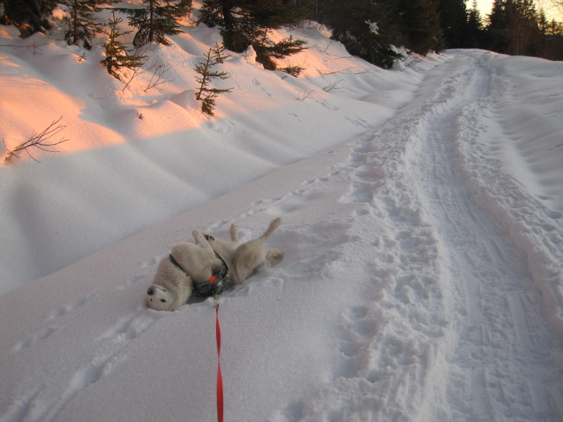 Saskia dans la neige en décembre 2011 - Page 2 921