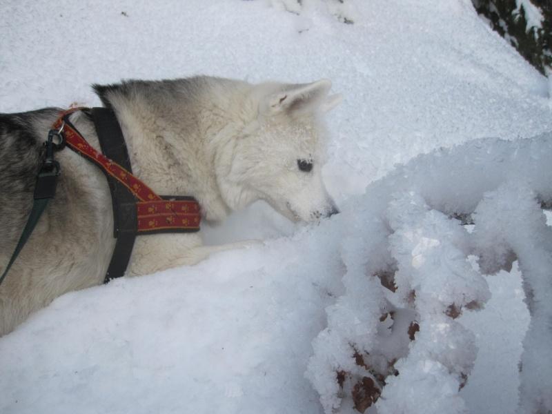 Saskia dans la neige givrée 925