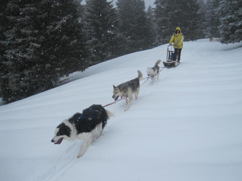 Deux attelages sur une neige portante 926