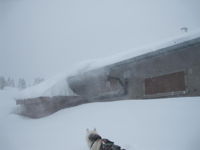 Nouvelles courses de Saskia dans la neige 936