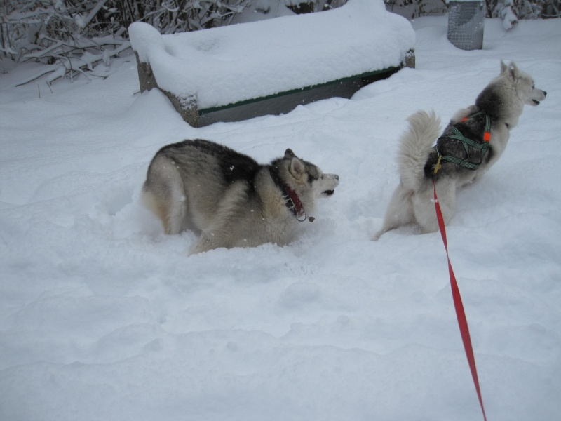 Nouvelles courses de Saskia dans la neige 937