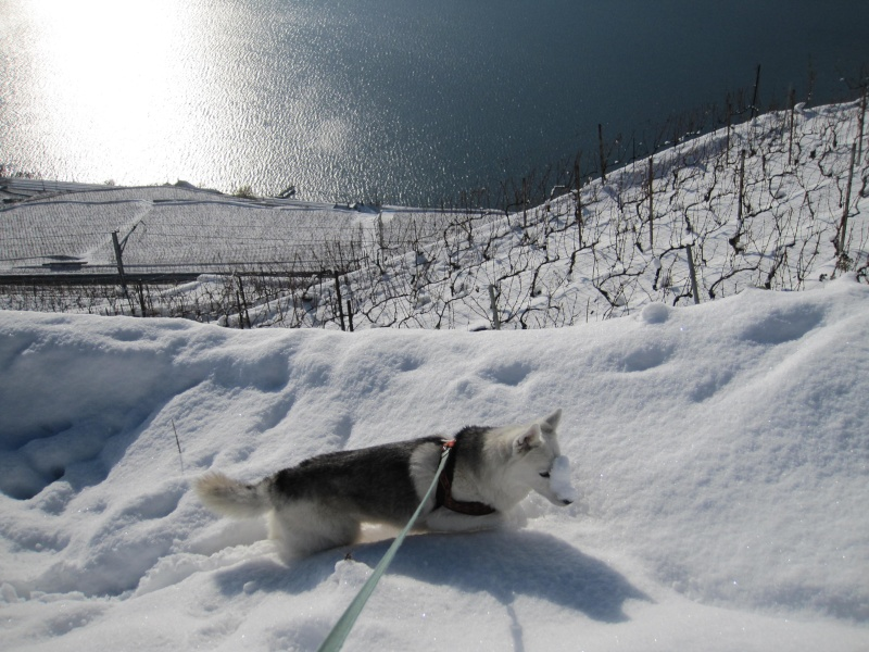 Nouvelles courses de Saskia dans la neige 939