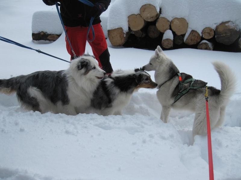 Nouvelles courses de Saskia dans la neige 940