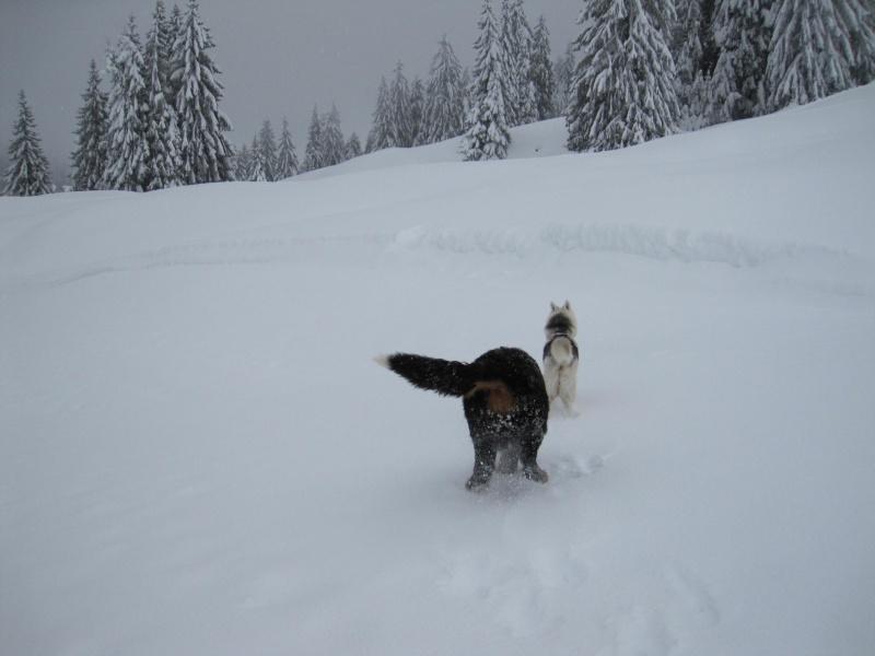 Nouvelles courses de Saskia dans la neige 941