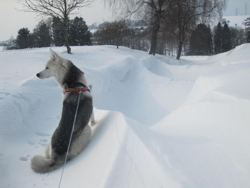 Saskia dans la neige en décembre 2011 Ai_fro10