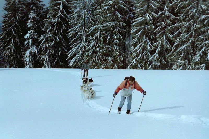 Mes plus beaux souvenirs de traineau à Chiens - Page 2 Ai_ski11