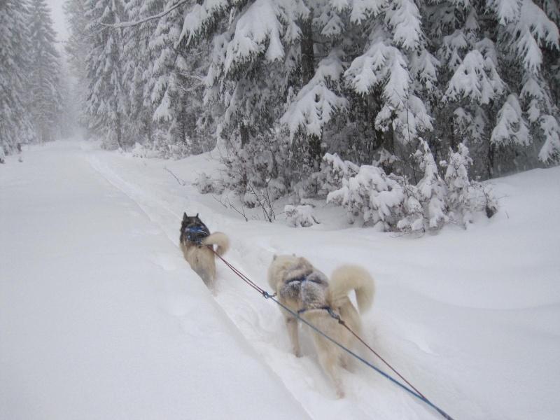 Deux attelages perdus dans 50 cm de neige poudreuse! Img_0713