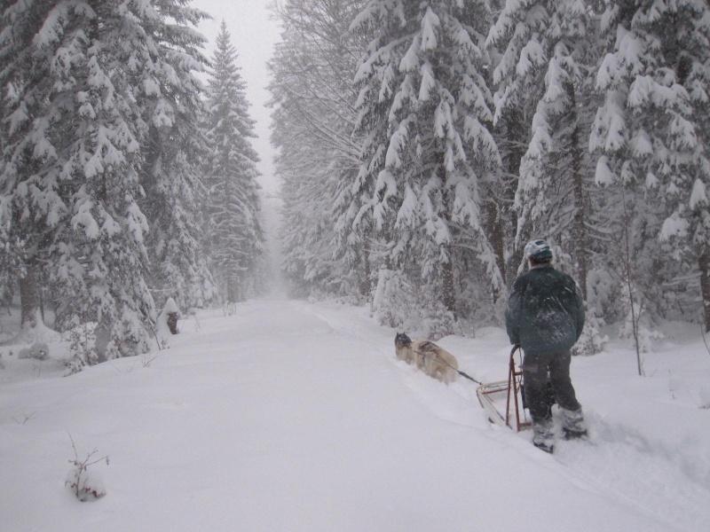 Deux attelages perdus dans 50 cm de neige poudreuse! Img_0714