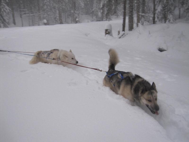 Deux attelages perdus dans 50 cm de neige poudreuse! Img_0715
