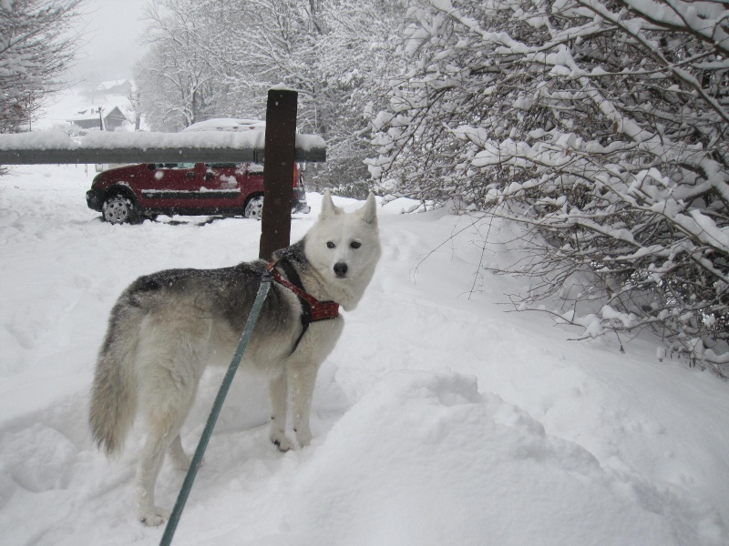 Saskia dans la neige en décembre 2011 Img_0812