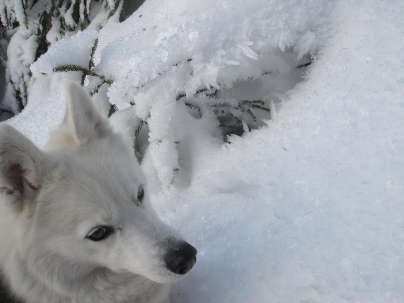 Saskia dans la neige givrée Img_1711