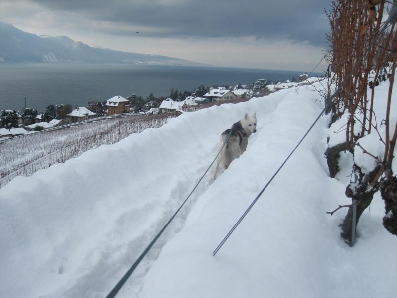 Saskia dans la neige en décembre 2011 Img_2911