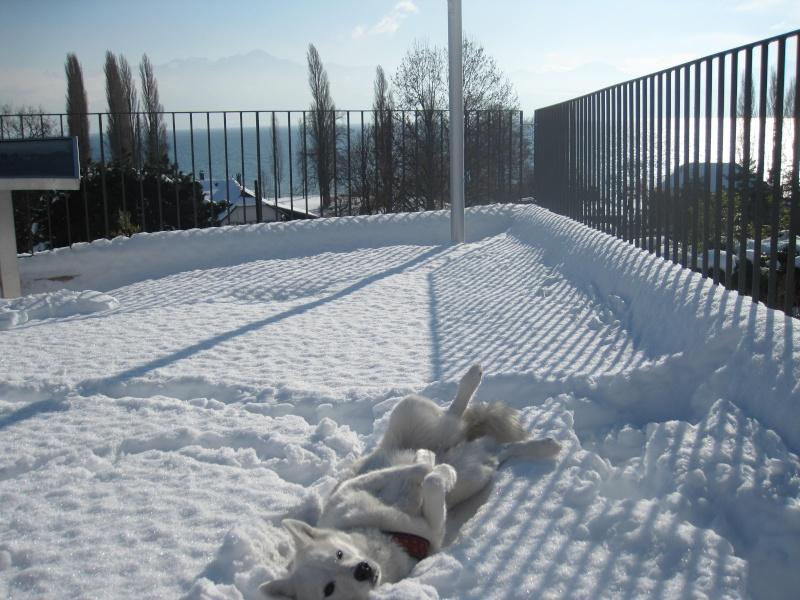 Saskia dans la neige en décembre 2011 Img_2914