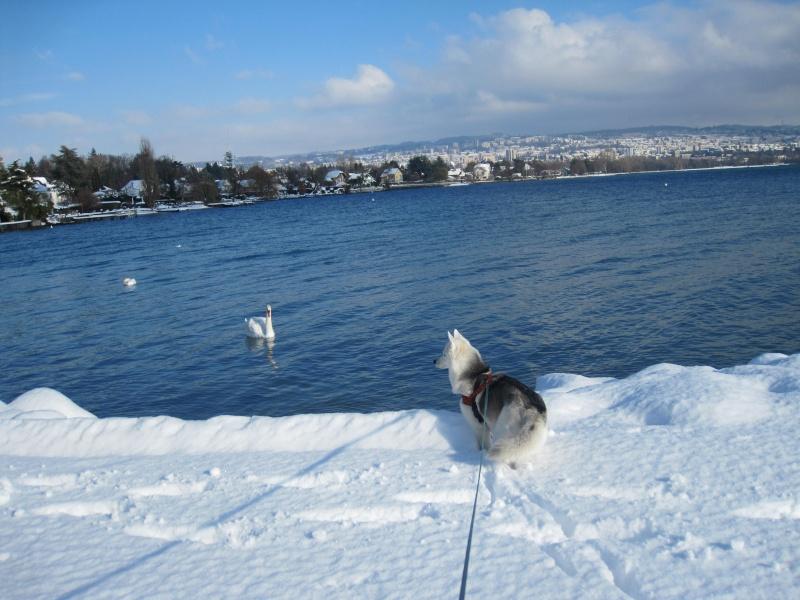 Saskia dans la neige en décembre 2011 Img_2915