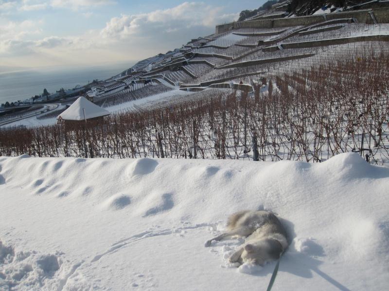 Saskia dans la neige en décembre 2011 Img_3011