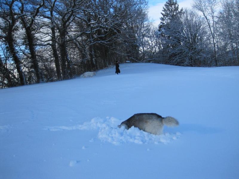 Nouvelles courses de Saskia dans la neige Img_4511