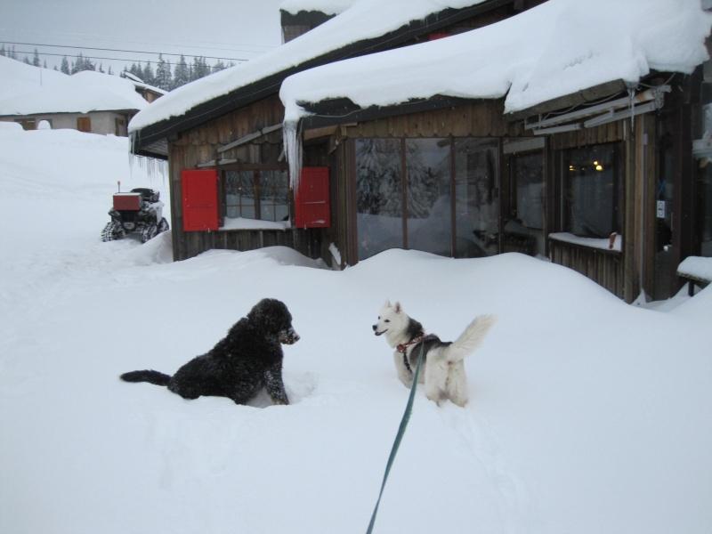 Nouvelles courses de Saskia dans la neige Img_4610