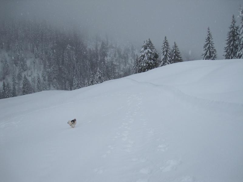 Nouvelles courses de Saskia dans la neige Img_4611