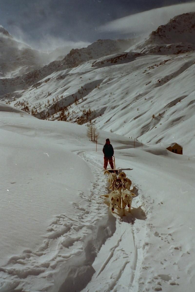 Mes plus beaux souvenirs de traineau à Chiens Pict0016