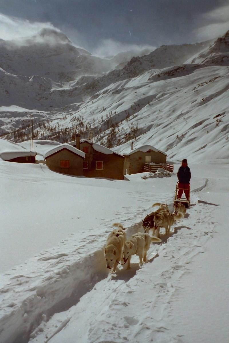 Mes plus beaux souvenirs de traineau à Chiens Pict0018