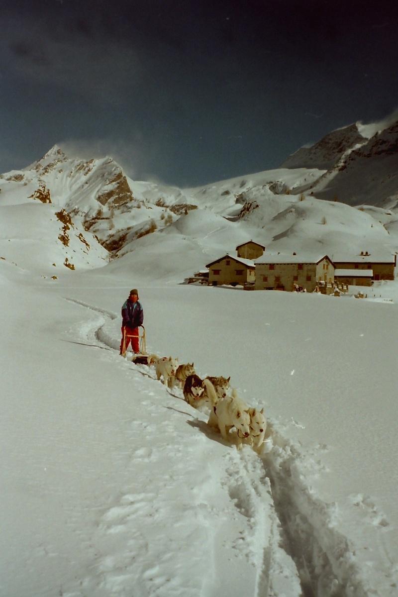 Mes plus beaux souvenirs de traineau à Chiens Pict0020