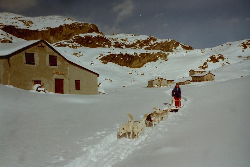 Mes plus beaux souvenirs de traineau à Chiens Pict0021