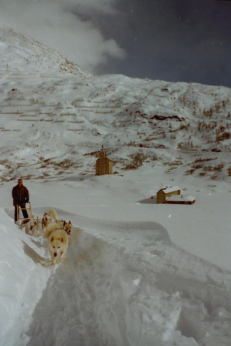 Mes plus beaux souvenirs de traineau à Chiens Pict0023