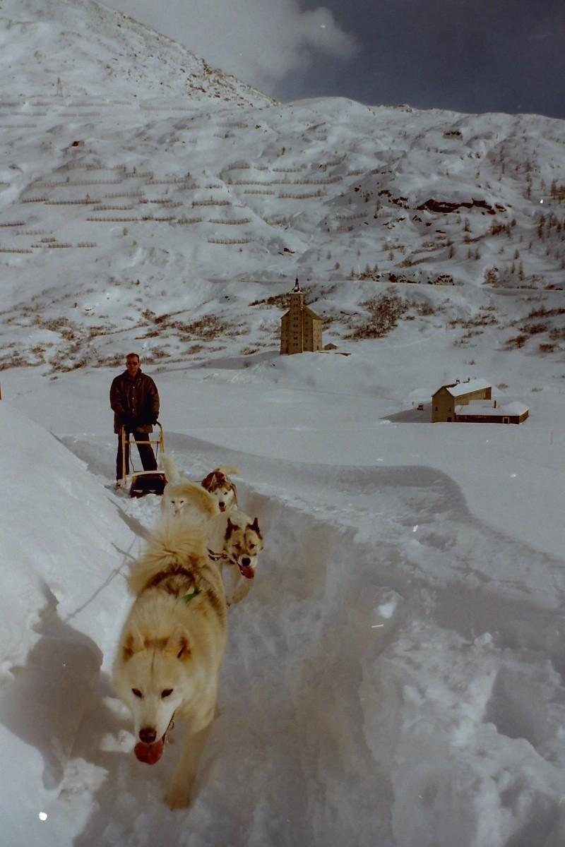 Mes plus beaux souvenirs de traineau à Chiens Pict0024