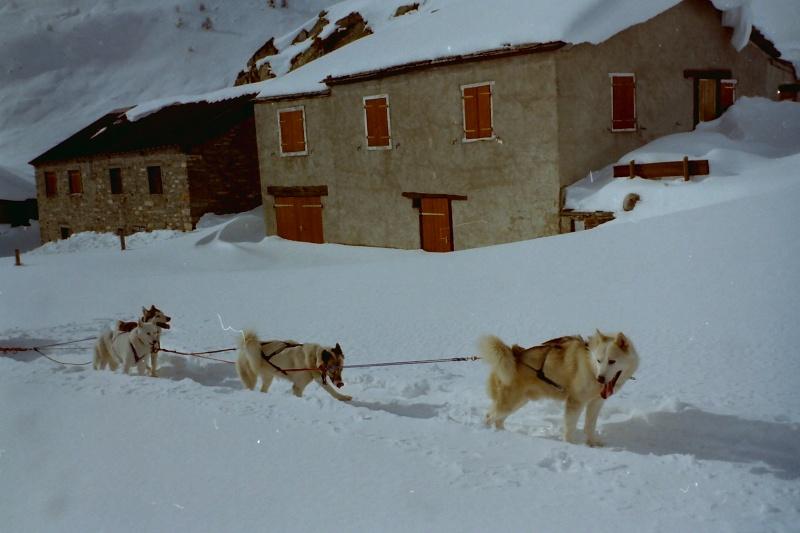 Mes plus beaux souvenirs de traineau à Chiens Pict0027