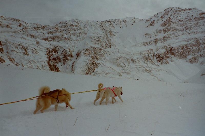 Mes plus beaux souvenirs de traineau à Chiens Pict0041