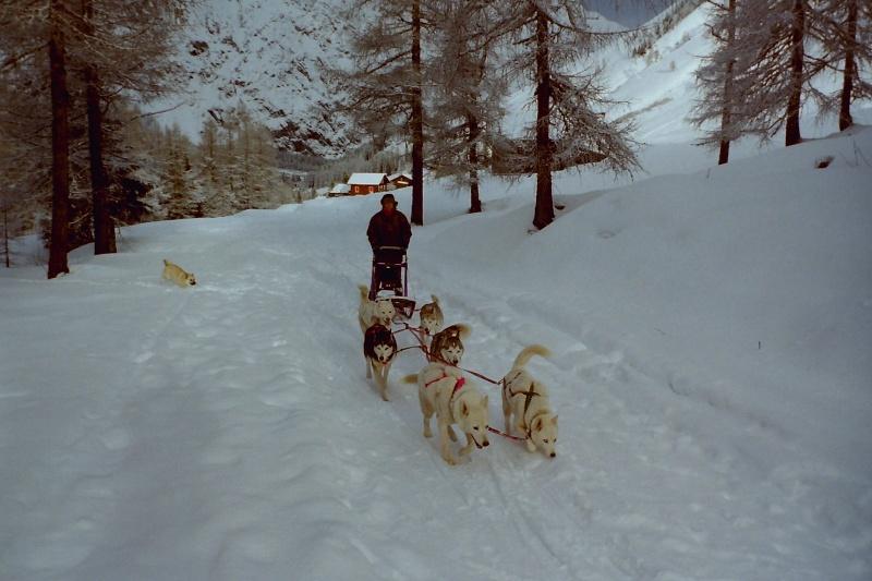 Mes plus beaux souvenirs de traineau à Chiens Pict0048