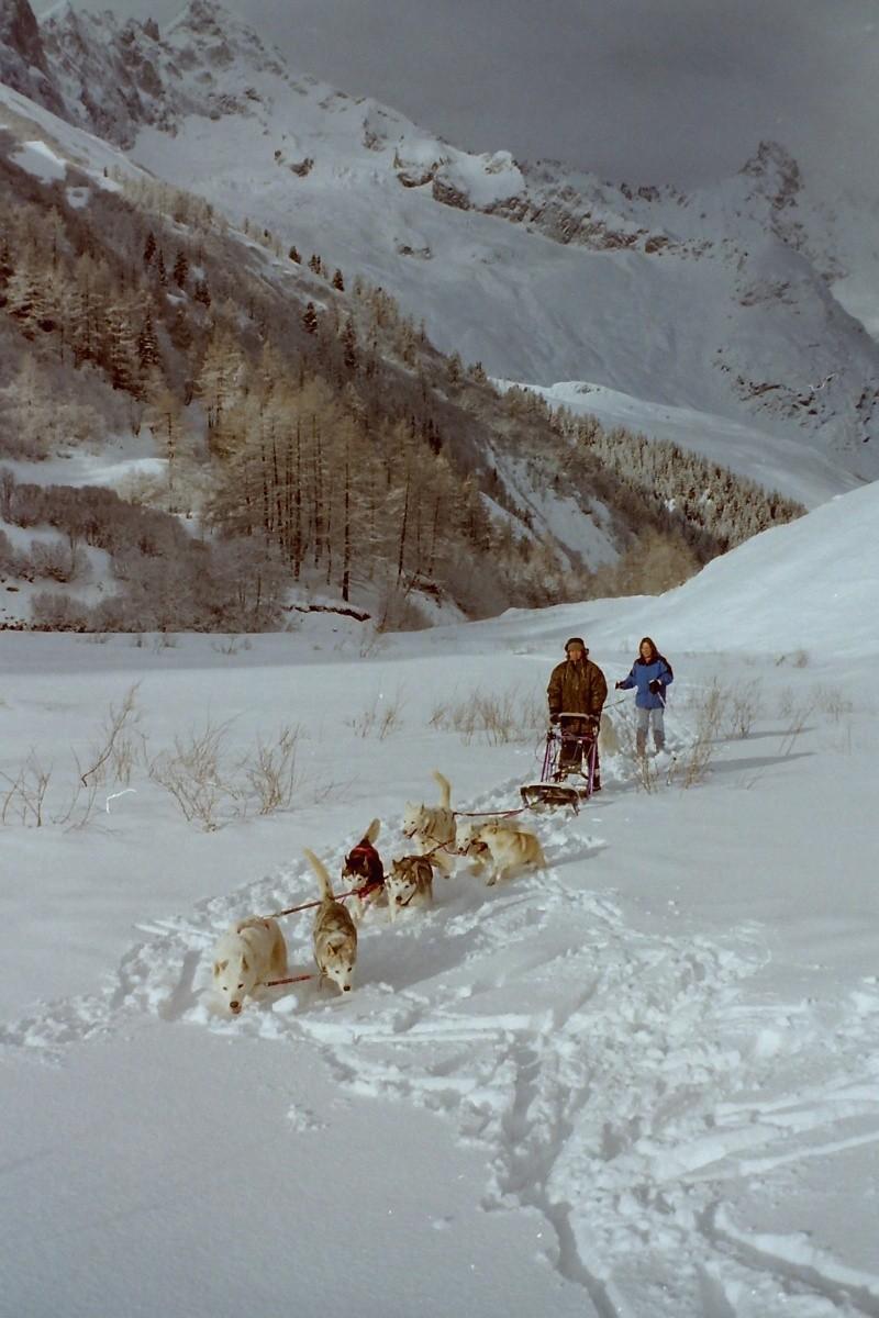Mes plus beaux souvenirs de traineau à Chiens Pict0050