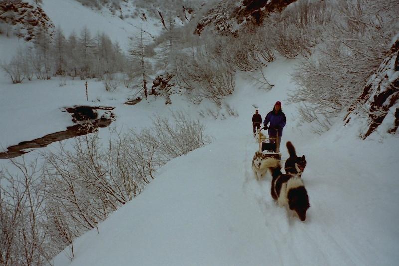 Mes plus beaux souvenirs de traineau à Chiens Pict0062