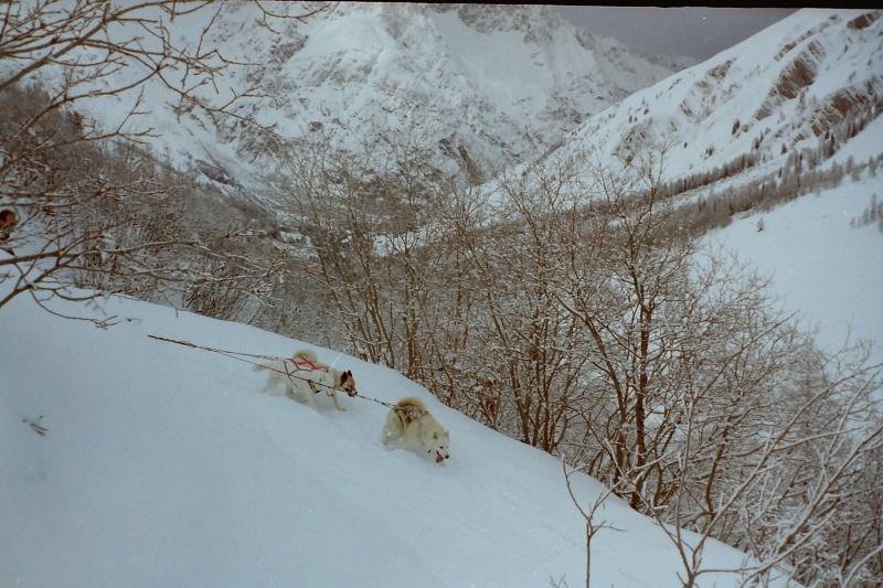 Mes plus beaux souvenirs de traineau à Chiens Pict0065