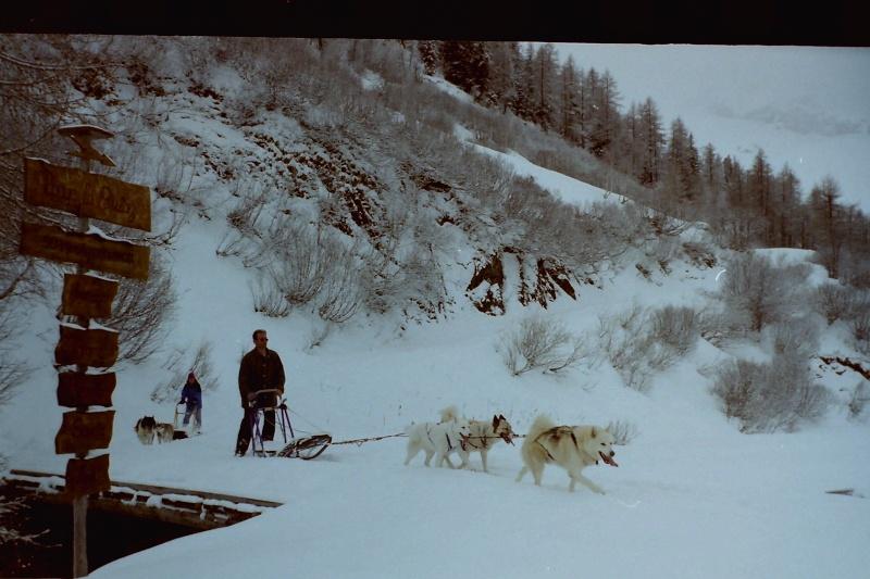 Mes plus beaux souvenirs de traineau à Chiens Pict0068