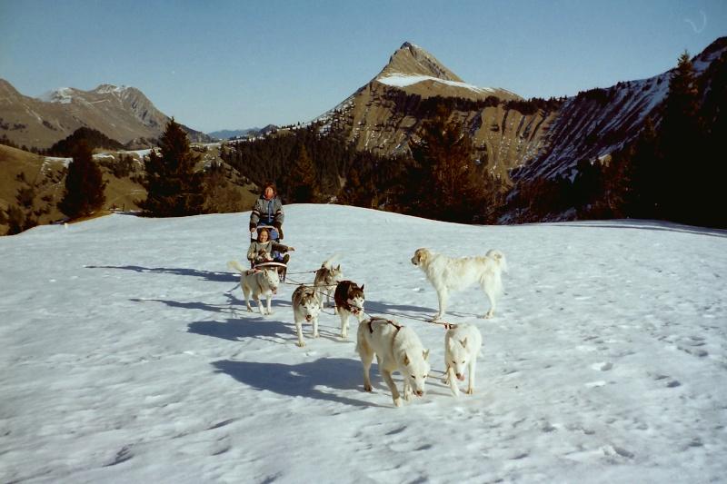 Mes plus beaux souvenirs de traineau à Chiens Pict0070