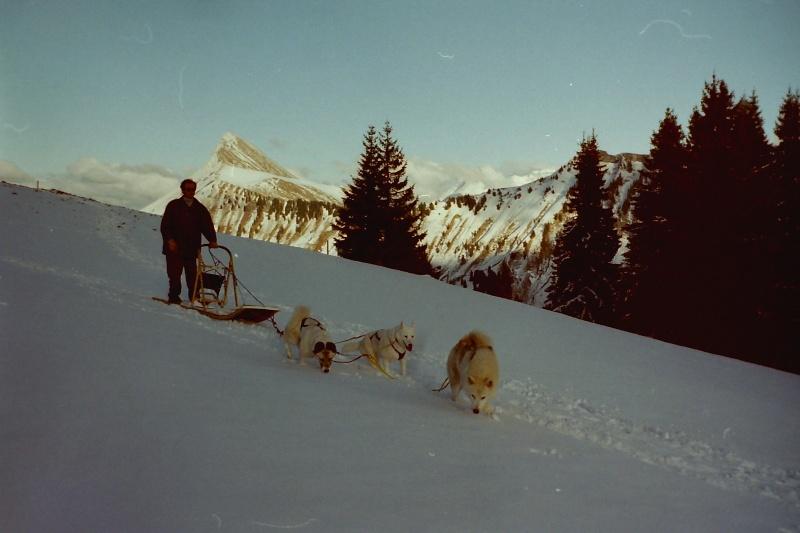 Mes plus beaux souvenirs de traineau à Chiens Pict0077