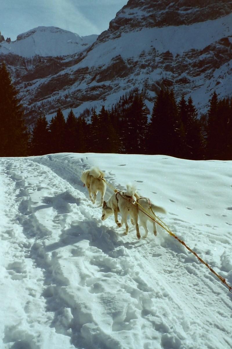 Mes plus beaux souvenirs de traineau à Chiens Pict0096