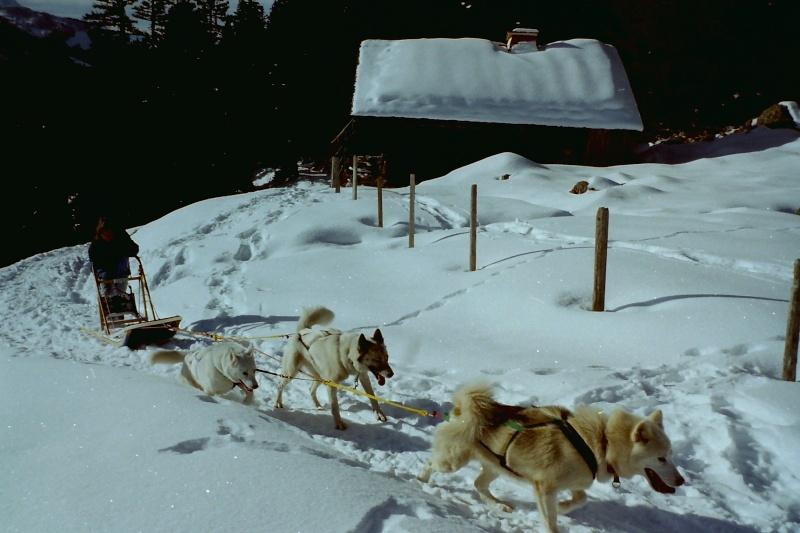 Mes plus beaux souvenirs de traineau à Chiens Pict0097