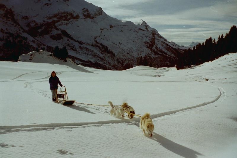 Mes plus beaux souvenirs de traineau à Chiens Pict0100