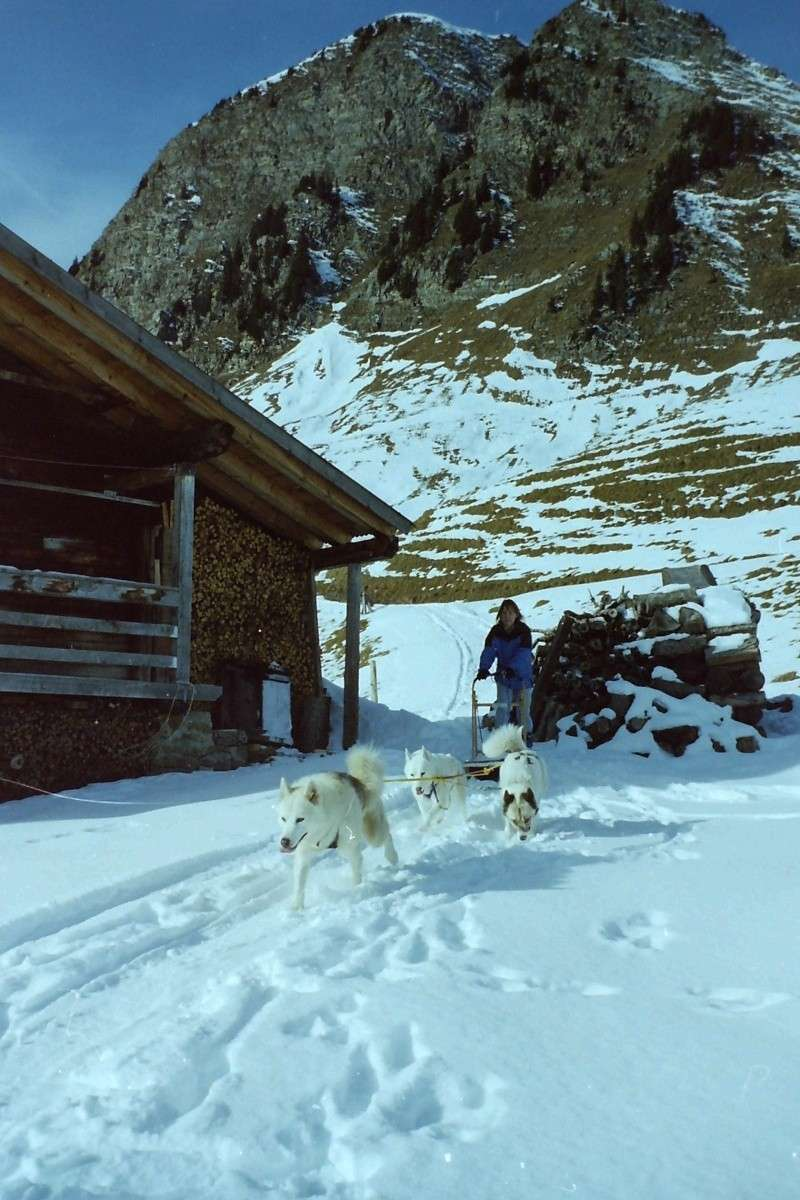 Mes plus beaux souvenirs de traineau à Chiens Pict0102