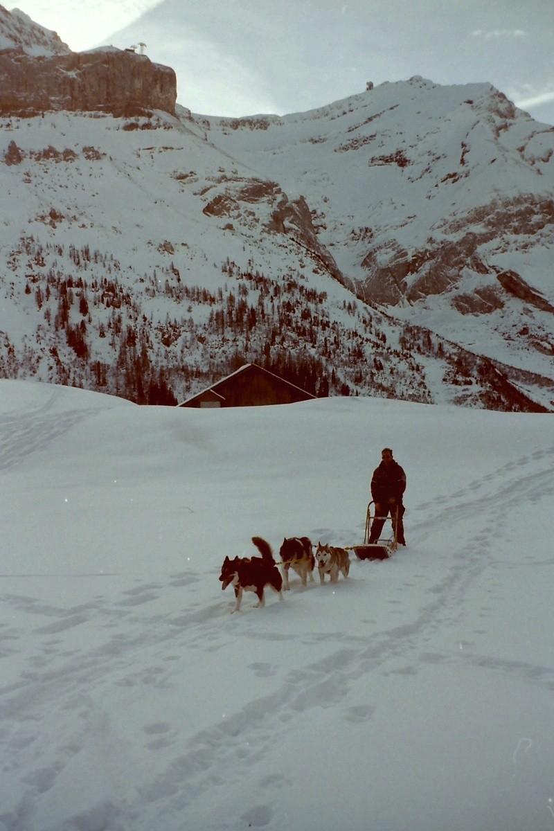 Mes plus beaux souvenirs de traineau à Chiens Pict0105